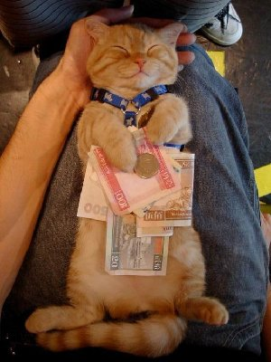 cat&money.JPG and